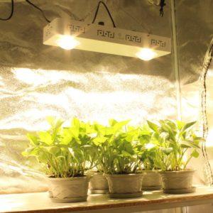 cob grow lights